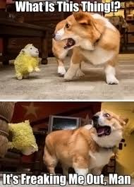 Dog Agression