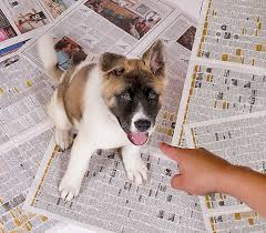 Housebreaking your puppy on newspaper