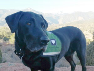 Zeus - beloved family pet who died of cancer